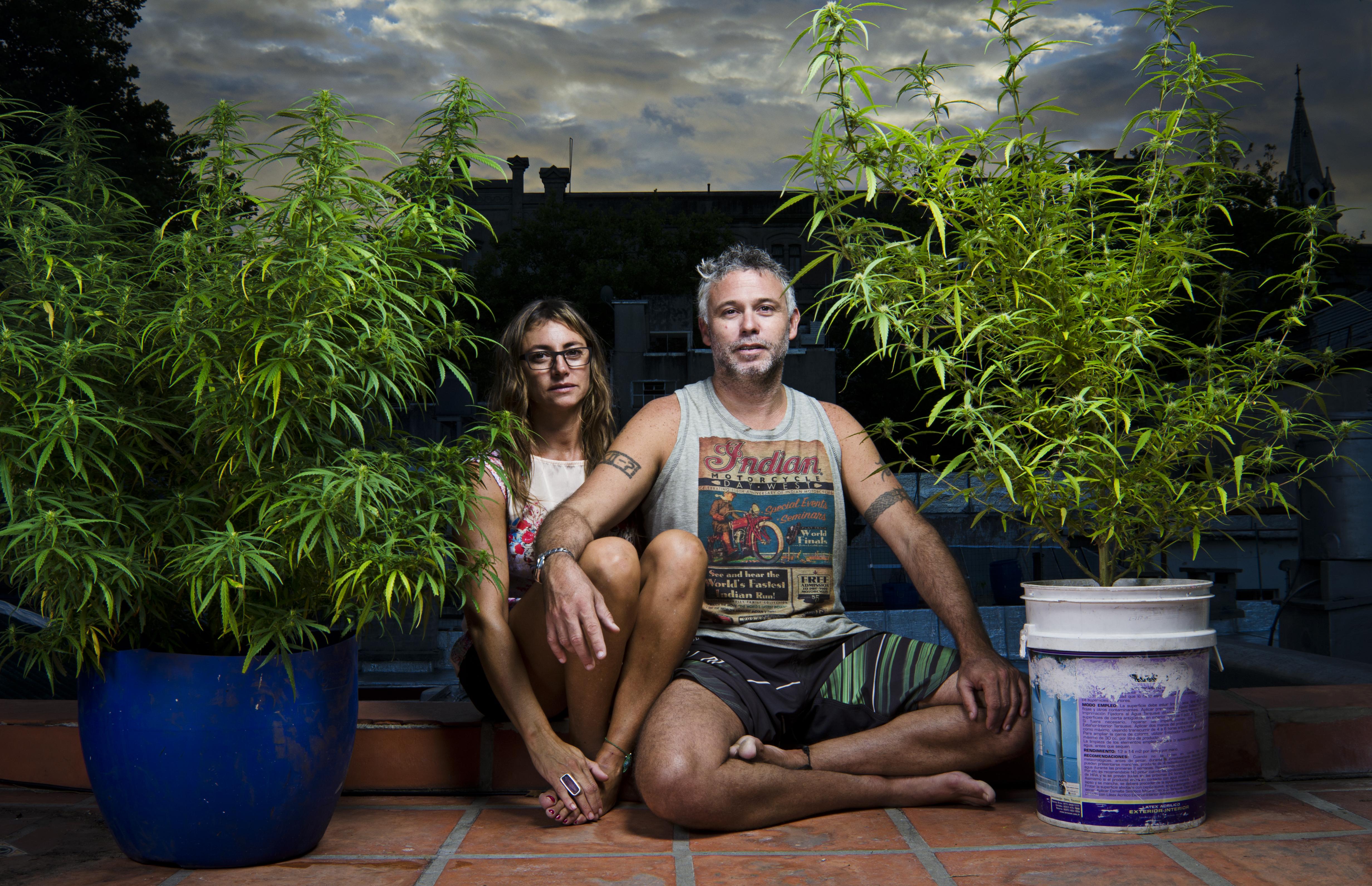 Cultivadores de cannabis en Uruguay. Foto de Mauricio Nieto.