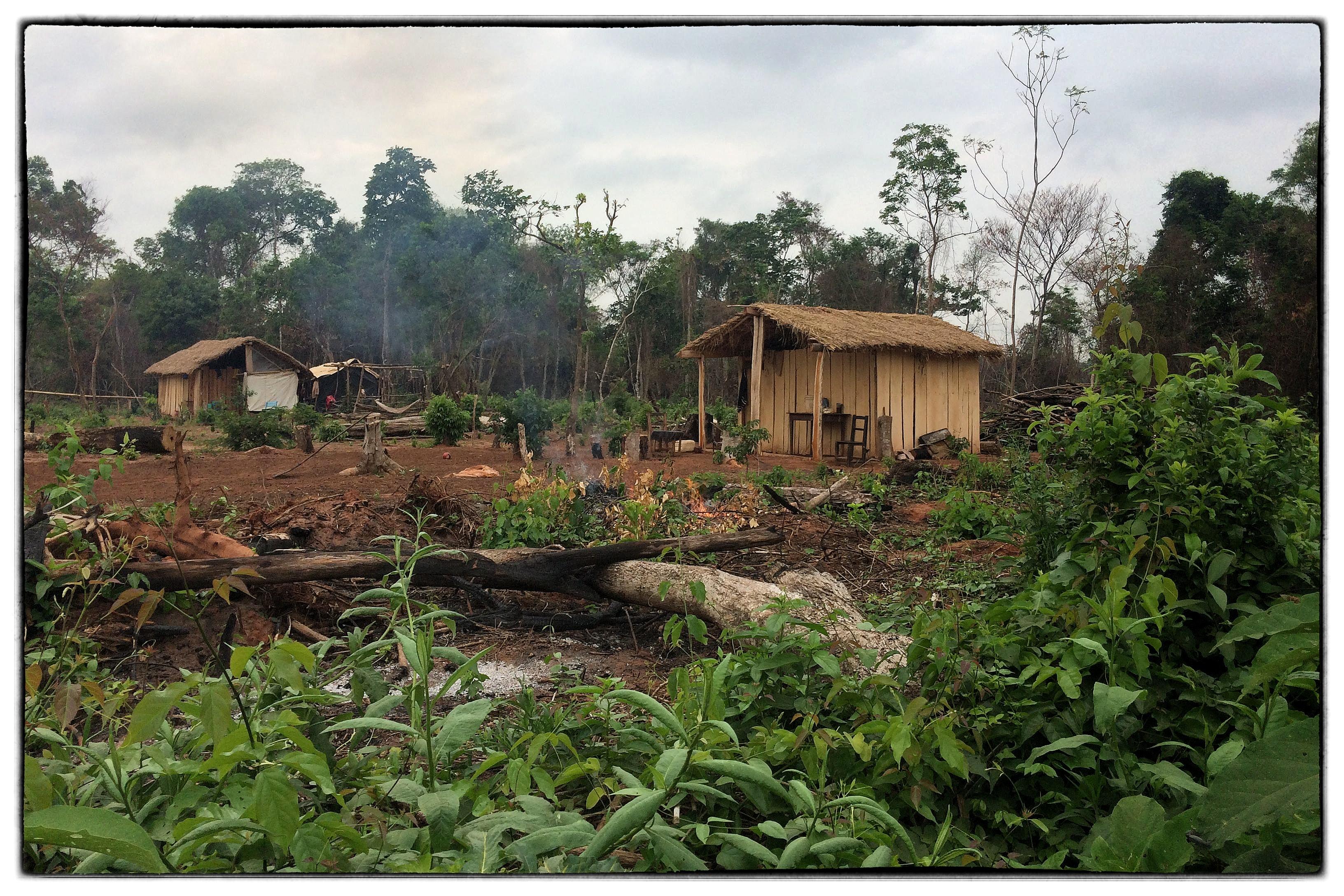 Cultivo Y Tráfico En Paraguay: La Ausencia Del Desentendido