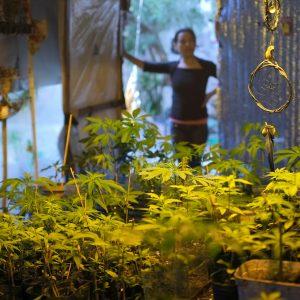El Invernadero Del Manga Rosa Cannabis Club En El Cerrito De La Victoria De Montevideo. Foto: Pablo Vignali