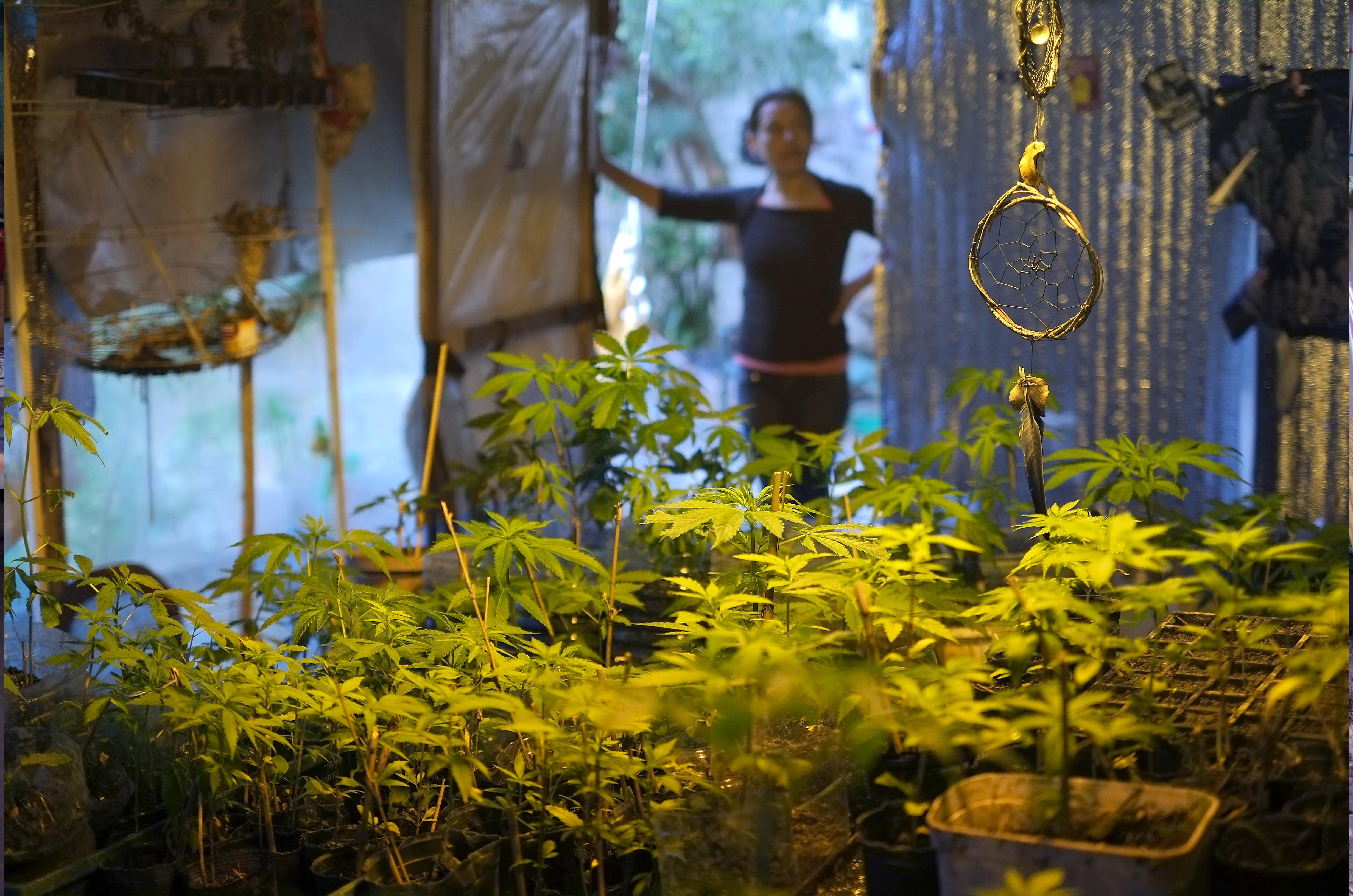 De Punta Del Este A La Periferia: Clubes De Cannabis En Uruguay