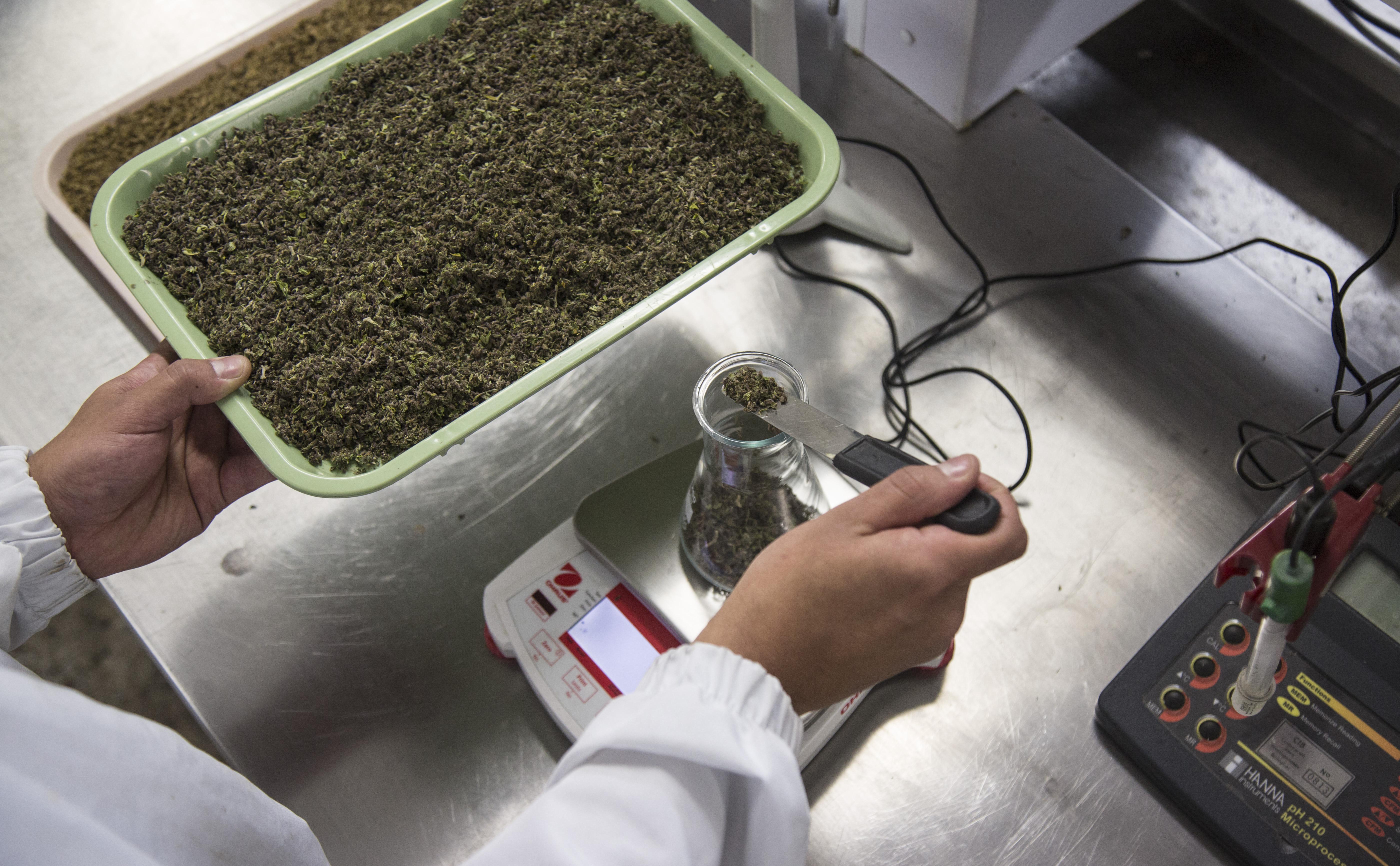 Destilación de cannabis en del Grupo Interdisciplinario de Estudios Moleculares de la Universidad de Antioquia. Foto: Juan Fernando Ospina.